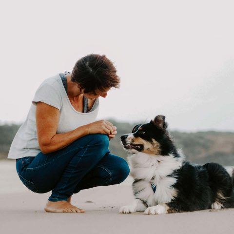 Dog trainer in Ballina